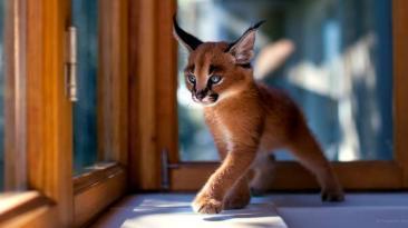 Facebook: 10 bellos animales captados por un artista ucraniano