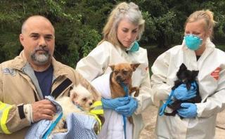 EE.UU.: Pareja tenía 276 perros en su casa de Nueva Jersey