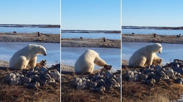 YouTube: un tierno oso polar 'adopta' y acaricia a un perro