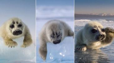 Facebook: después de tres años logró retratar a foca bebe