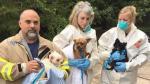 EE.UU.: Pareja tenía 276 perros en su casa de Nueva Jersey - Noticias de doce casas