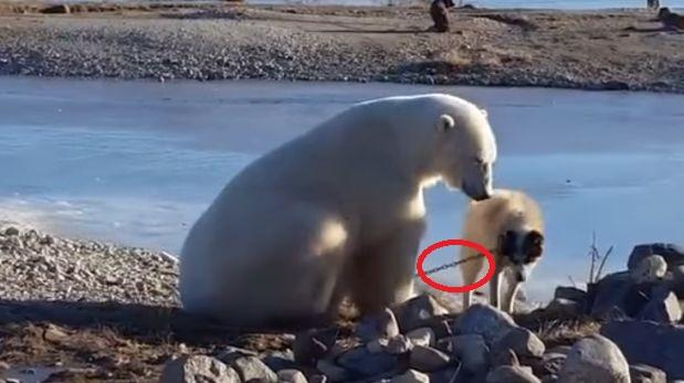 La cruel verdad sobre el oso polar y perro de trineo [VIDEO]