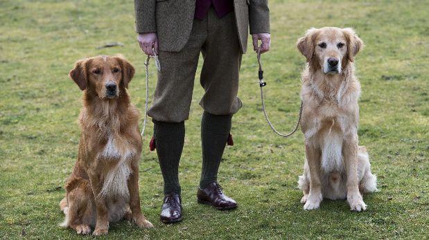 Los perros tienen una memoria similar a la del hombre