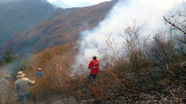 Incendios forestales: fuego arrasó con más de 50 mil hectáreas
