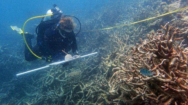El 67% de los corales del norte de la Gran Barrera ha muerto