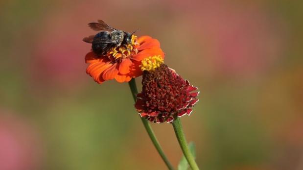Científicos crean primera abeja robótica que puede polinizar