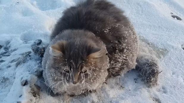 Un gato es rescatado tras quedar congelado y pegado al piso