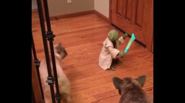 Facebook: juguete del maestro Yoda asusta a dos bulldogs