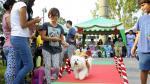Perros desfilaron con disfraces navideños en Surco - Noticias de cesar vallejo