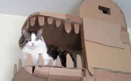 YouTube: construyó un palacio en forma de dragón para su gato