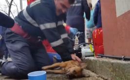 YouTube: Bombero salvó a perro al darle respiración boca a boca
