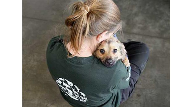 Una rescatista de Humane Society International haciendo parte de su labor de rescate.