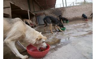 Perros sin hogar podrían tener una contundente Navidad