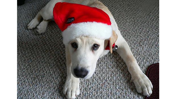 [Foto] A pensar dos veces antes de regalar mascotas en Navidad