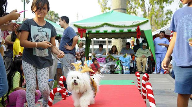 [Foto] Eventos con mascotas para este fin de semana