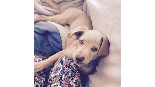 [Foto] Lupita, la mascota que cambió y sigue cambiando vidas