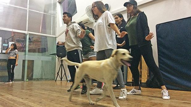 [Foto] Túpac, fiel guardián de nuestros jóvenes bailarines