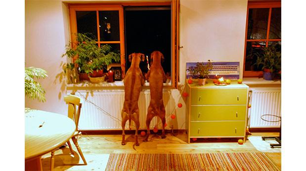 [Foto] ¿Cómo calmar a un perro asustado por los fuegos artificiales?
