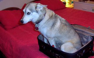 ¿Qué hacer con tu mascota si sales de viaje?