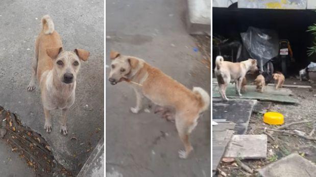 Perro recolecta comida para cachorros y conmueve a miles