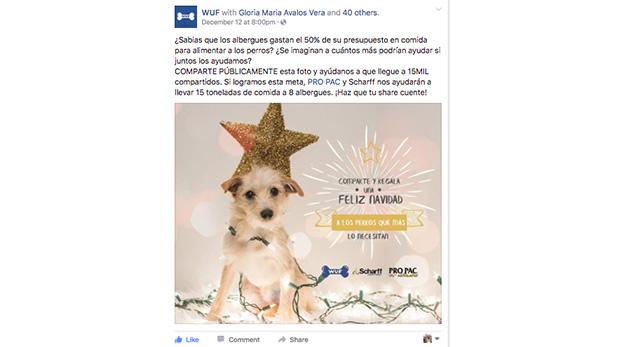 [Foto] Cientos de perros fueron beneficiados con sorpresa de Navidad