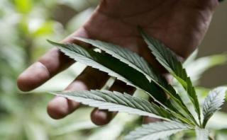 Florida: 300 médicos ya pueden recetar marihuana a pacientes