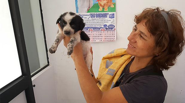 Gladys Ilich en la veterinaria sosteniendo a uno de los cachorros rescatados en Sauce.