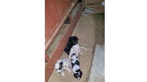 La primera foto tomada a los cachorros debajo de una de las cabañas del albergue en Sauce.