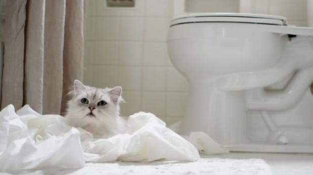 YouTube: 7 cosas en internet que harían feliz a un gato [VIDEO]