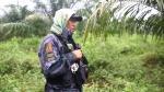 Filipinas busca 110 presos tras la mayor fuga de su historia - Noticias de palma aceitera