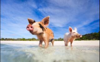 10 lugares del mundo en los que los animales son los reyes