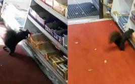 [BBC] Las ardillas ladronas que roban chocolates en Toronto