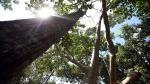 Sector forestal: seis datos del manejo de la madera en el Perú - Noticias de empleo