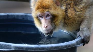 Rusia enviará un macaco en su próxima expedición a Marte