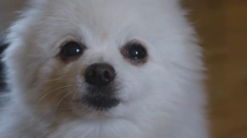 Internet llora la partida del 'cantante' canino más popular