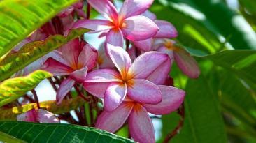 Cuba es la isla del Caribe con más plantas amenazadas