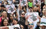 Colombia: Corridas de toros regresan en medio de protestas