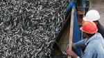 Perú pescará 10 mil toneladas de jurel fuera de las 200 millas - Noticias de region lima