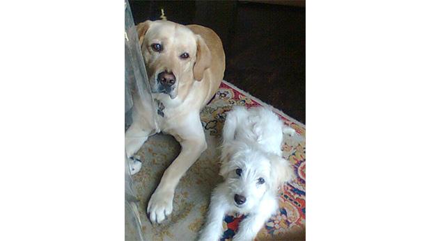 Zeus y Lara de cachorrita.