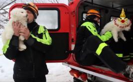 Rescatan tres cachorros en hotel arrasado por alud en Italia
