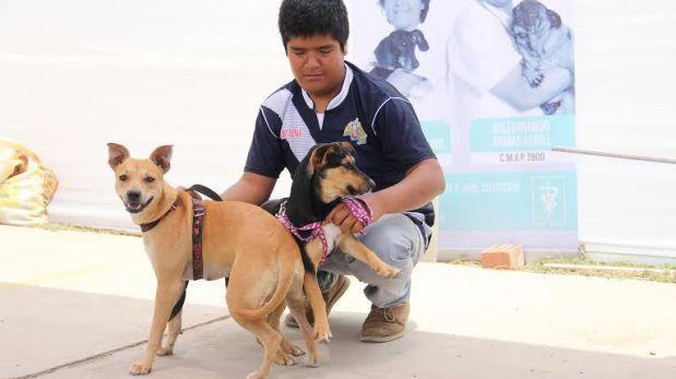 San Borja entregará carnet de identidad de perros y gatos
