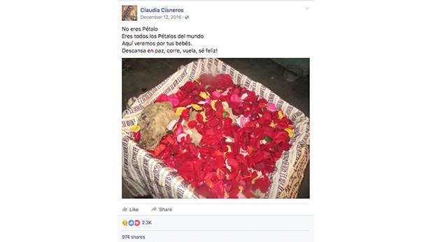 Así fue despedida ´Pétalo, entre pétalos de rosas.