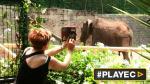 Chile convertirá sus zoológicos en bioparques [VIDEO] - Noticias de destrucción ambiental