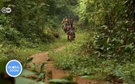 Camerún intercambia armas por motos a favor de la conservación