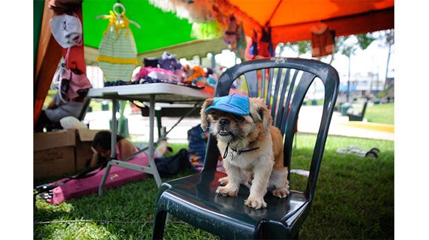 Presentaron en feria de salud para mascotas de Surco gorritas para proteger a los perros del sol.