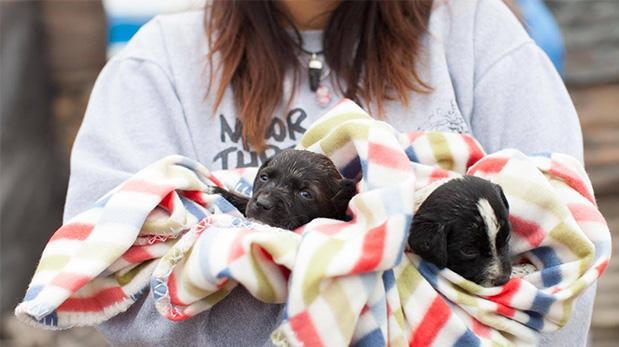 Se unen para ayudar animales víctimas de huaicos en Ica
