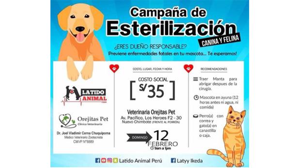 [Foto] Eventos para celebrar el amor por tu mascota