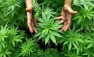 Forman comité de expertos para evaluar la marihuana medicinal