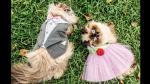 Bodas para mascotas, un negocio cada vez más común en Lima - Noticias de malecon grau