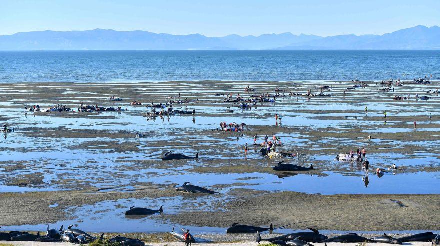 Mamferos marinos: las ballenas - Monografiascom